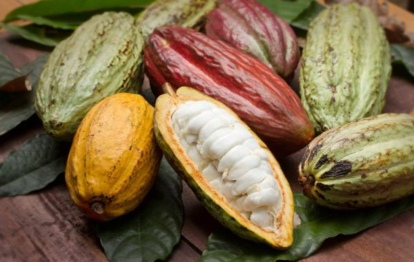 Cacao Business opportunity